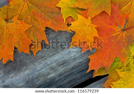 autumn leaves on rustic wooden surface