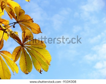 Autumn leaves on sky background, horse chestnut