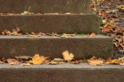 autumn leaves on stone stairs in october