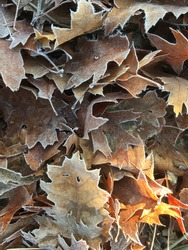 Autumn leaves on the ground in winterseason, with a sunny spot in an abstract pattern.