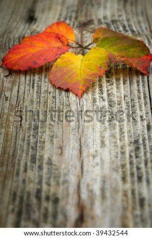 autumn leaves on the old striped wooden background
