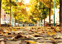 Autumn leaves on the pedestrian passage with trees which disappearing in blurry perspective