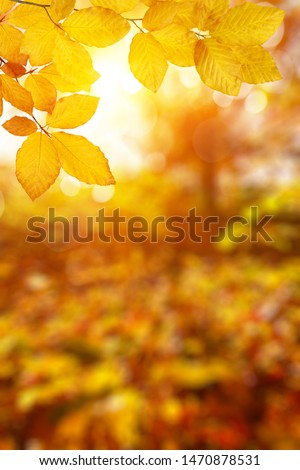 Autumn leaves on the sun. Fall blurred background. #1470878531