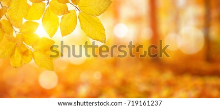 Autumn leaves on the sun. Fall blurred background. stock photo