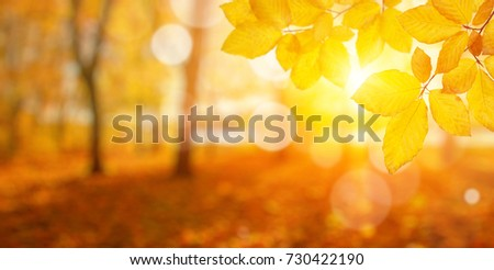 Autumn leaves on the sun. Fall blurred background. #730422190