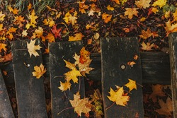 Autumn leaves on the wet wooden stairs