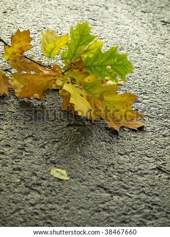Autumn leaves on wet asphalt