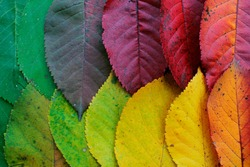 Autumn leaves organized in an aesthetically pleasing way.