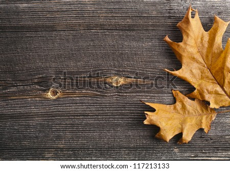 Autumn Leaves over wooden board background with copy space