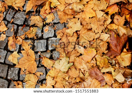 autumn leaves paris cobbles leafs