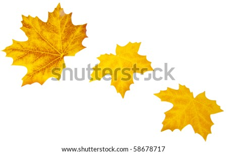 Autumn Leaves Perfect for Borders and Backgrounds. - stock photo
