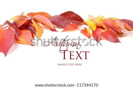 Autumn leaves red and yellow on white background #117344170