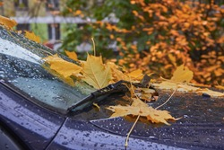 autumn leaves that fell on a wet car after the rain