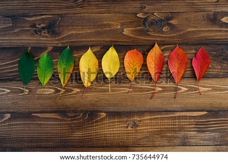 Autumn leaves transition from green to red on wooden background. Concept change of season.