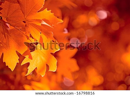 Stock Photo autumn leaves, very shallow focus