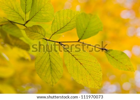 Autumn leaves with color background, shallow focus, beautiful bokeh
