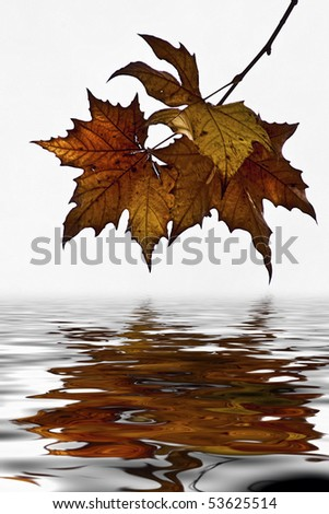 Autumn Leaves with reflection in the water
