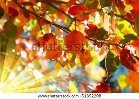 Autumn Leaves with sun rays