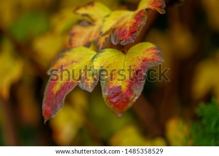 autumn leaves with yellow red colors #1485358529