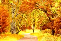 Autumn Leaves Woods Landscape