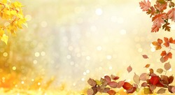 Autumn leaves yellow and red adorn the beautiful nature bokeh background. Wide panorama format. Beautiful nature background with bokeh and flash of autumn landscape. Fall. Backgrounds. Autumn concept