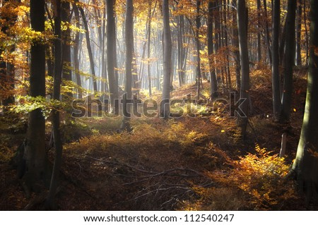 autumn light in forest