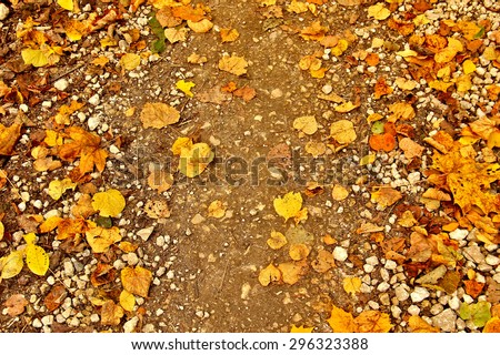 Autumn loose road with yellow leaves of maple, birch, oak and aspen