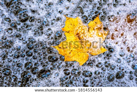 Autumn maple leaf in water bubbles. Autumn maple leaf in water. Autumn maple leaf top view. Autumn maple leaf