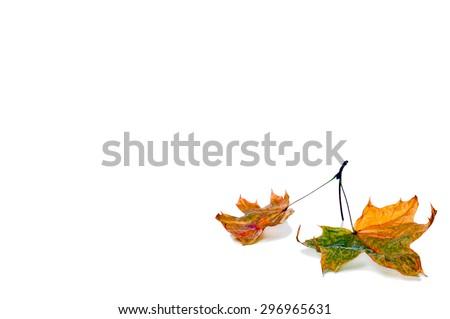 Autumn maple leaf isolated on white background. #296965631