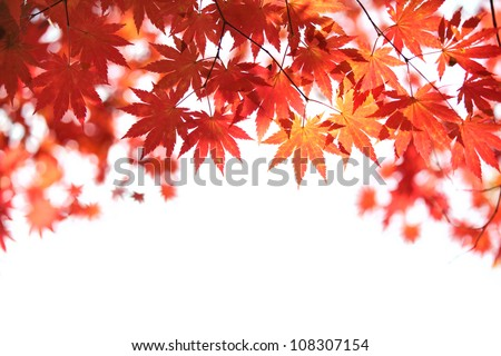 Autumn maple leaves background #108307154