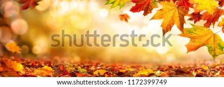Autumn maple leaves decorate a beautiful nature bokeh background with forest ground, wide panorama format
