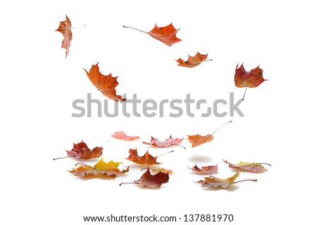 autumn  maple leaves falling  on white background  with shadow #137881970