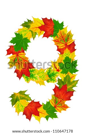 Autumn maple Leaves in the shape of number 9 isolated on white