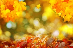 Autumn maple leaves on a blurred background with bokeh, close-up, leaves texture, beautiful nature, red autumn background