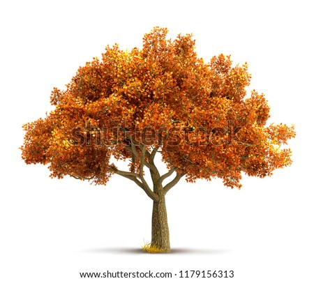 autumn maple tree isolated #1179156313