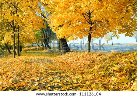 autumn maple trees in autumn city park