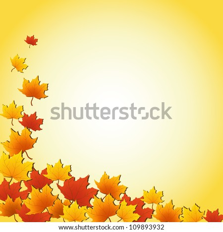 Autumn maples leaves