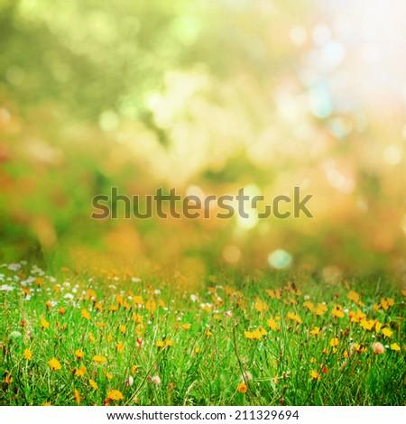 Autumn meadow - Shutterstock ID 211329694