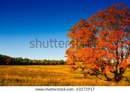 Autumn meadow - stock photo