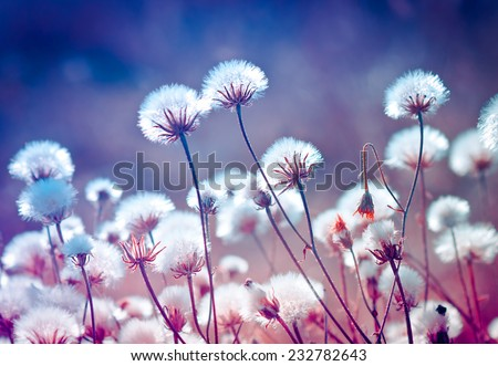 Autumn meadow flowers during sunset. Shallow depth of field
