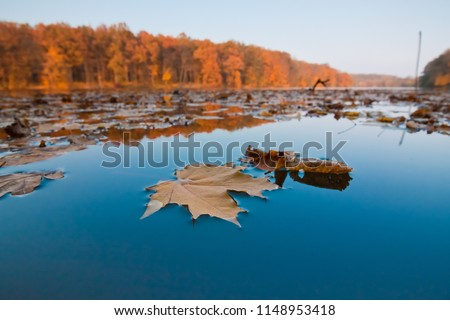 autumn midday forest and lake landscape, leaves of maple and oak lie on still deep blue water surface, seasonal background photo