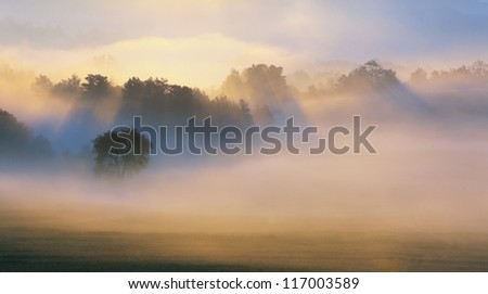 Autumn Mist, trees are wet, damp fog of forest