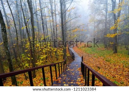 Autumn misty forest stair down landscape. Autumn forest stairway fog view. Forest stairway fog in autumn season. Autumn stairway fog view