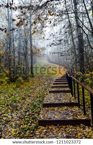 Autumn misty forest stair. Forest mist stairway in autumn fog. Autumn forest stairway mist fog. Forest stairway autumn fog mist
