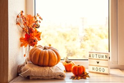 Autumn mood. Cozy autumn still life on the windowsill with lightbox and pumpkin, persimmon, warm wool sweaters, maple leaves.