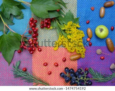 Autumn mood. Warm autumn on a picnic coverlet. Вelicious and healthy autumn fruits: viburnum, grapes, apples #1474754192