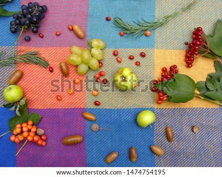 Autumn mood. Warm autumn on a picnic coverlet. Вelicious and healthy autumn fruits: viburnum, grapes, apples #1474754195