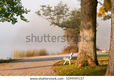 autumn morning in a park on the lakeside