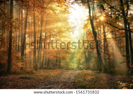 Autumn morning in the forest stock photo