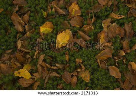Autumn moss - stock photo